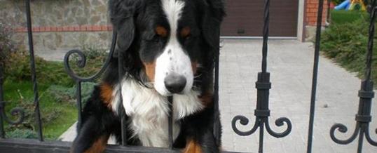 Внимание, сторожевая собака на территории дома в Лондоне