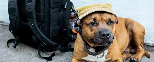 Собака-охранник как гарантия безопасности дома в Лондоне