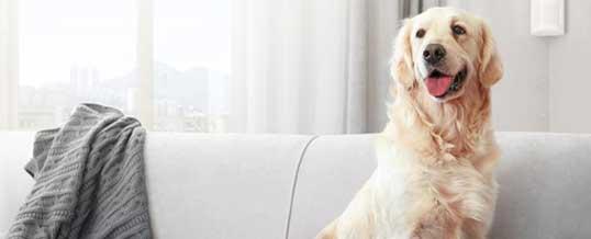 Не утруждайте себя в Лондоне покупкой сторожевой собаки