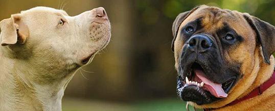 Собаки-охрана как часть плана обеспечения безопасности дома в Лондоне