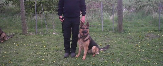 UK security patrols